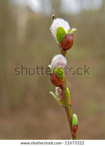 buds on branch tree - stock photo