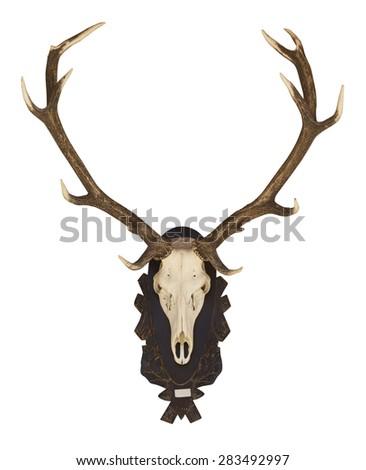 Buffalo skull and horn isolated white background. - stock photo
