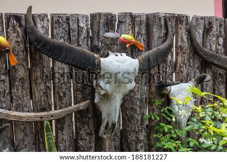 Buffalo skull hanging on the wall. - stock photo