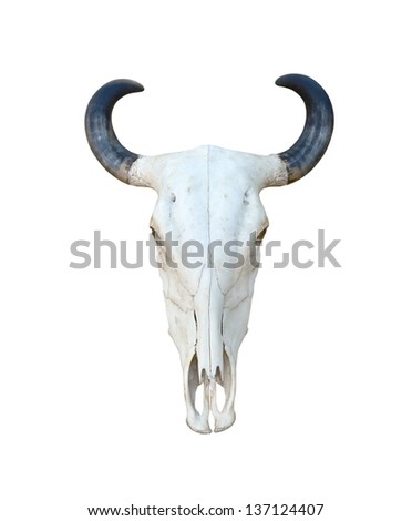Buffalo skull isolate on white background - stock photo