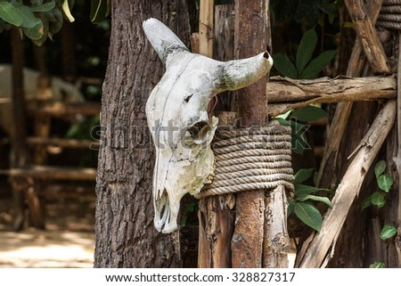buffalo skull tied on a tree - hunting animal leading to extinction concept - stock photo