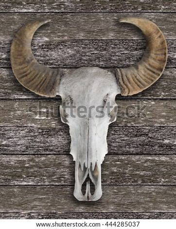 Buffalo  skull with horns on wall - stock photo
