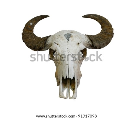 buffalo skull with horns on white (path in side) - stock photo