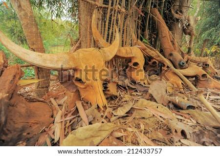 Buffalo skulls death field - stock photo