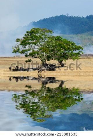 buffalos under the tree - stock photo
