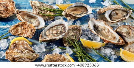 Buffet of fresh shucked oysters on ice with green seaweed shoots and wedges of tangy lemon for flavoring, high angle, full frame view - stock photo