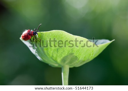 Bug with red armor travels round the plant - stock photo