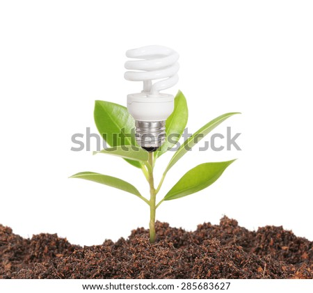 Bulb light with tree,plant inside  - stock photo