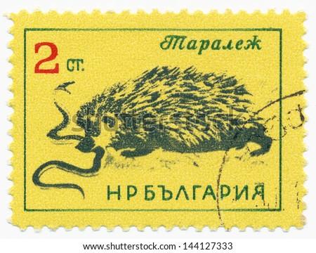 BULGARIA - CIRCA 1963: A stamp printed in Bulgaria shows a European Hedgehog (Erinaceus europaeus) and snake, series, circa 1963 - stock photo