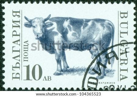 BULGARIA - CIRCA 1991: A stamp printed in Bulgaria shows cow, circa 1991 - stock photo