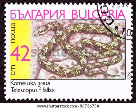 BULGARIA - CIRCA 1989:  A stamp printed in Bulgaria shows the European Cat Snake, Telescopus fallax, circa 1989. - stock photo