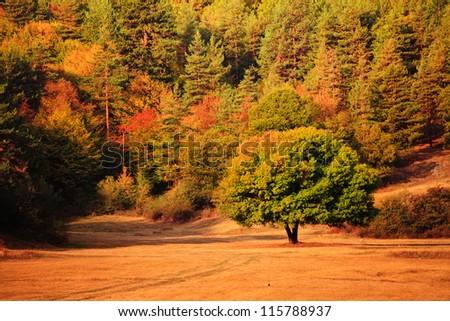 bulgarian autumn forest in sunrise light - stock photo