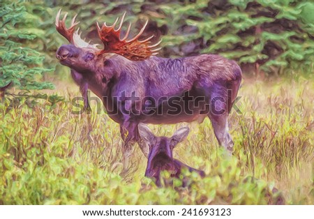Bull moose and cow in Grand Teton National Park - stock photo