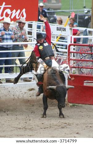 bull rider - stock photo