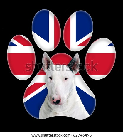 Bull Terrier, Dog portrait with a background of England flag in paw print - stock photo
