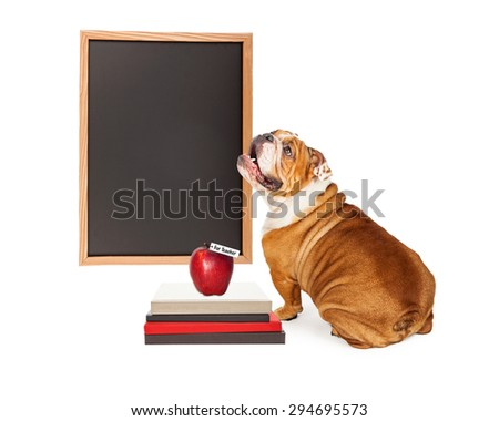 Bulldog breed dog looking up at a blank chalk board next to a stack of books and an apple for the teacher. Enter your own text. - stock photo