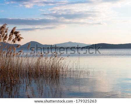 Bullrushes in Lake di Trasimeno.  The lake is a shallow muddy lake abundant with fish - stock photo