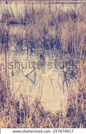 bulrush marsh in fall season, autumn background. Dry grass near a wetland marsh in autumn. - stock photo