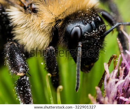Bumble bee close up on green and purple flower - stock photo