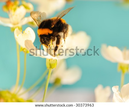 Bumble bee on a flower - stock photo
