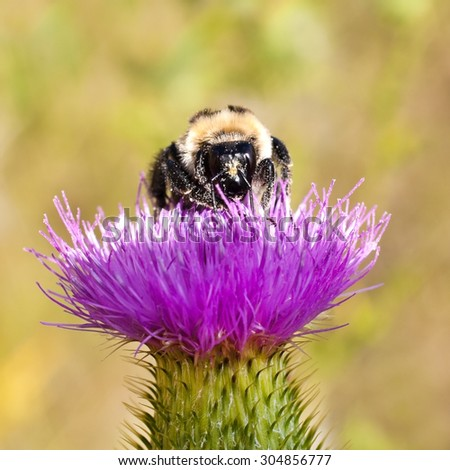Bumble bee sitting on a flower - stock photo