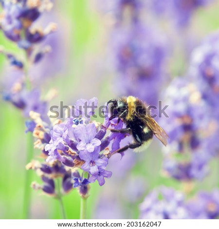 bumblebee - stock photo