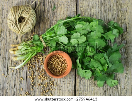Bunch fresh cilantro, and coriander seeds on a wooden table - stock photo