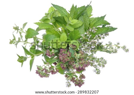 Bunch fresh herbs mint, thyme, lemon balm isolated on white background - stock photo