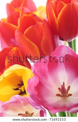 Bunch of beautiful spring flowers - stock photo