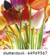 Bunch of beautiful spring flowers - colorful tulips against white background - stock photo