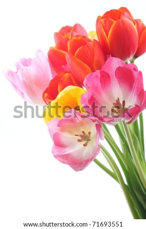 Bunch of beautiful spring flowers -tulips isolated on white. - stock photo