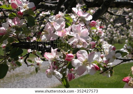 bunch of blossoms  - stock photo