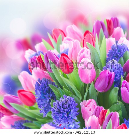 bunch of  blue hyacinth and  tulips  close up  isolated on white background - stock photo