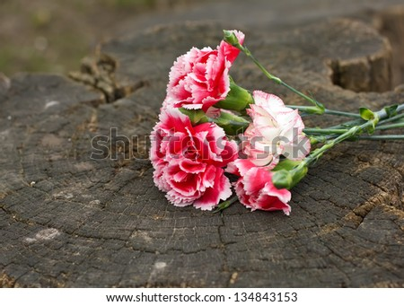 Bunch of bright white and pink carnations on wooden  background. Selective focus. - stock photo