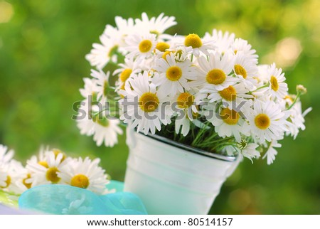 bunch of chamomile flowers on a table in the garden - stock photo