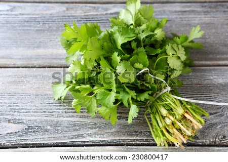 bunch of fresh cilantro on the boards, fresh herbs - stock photo