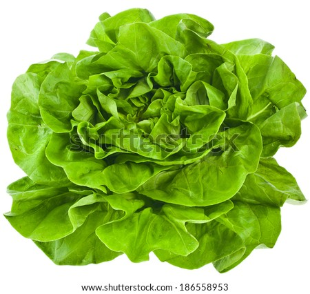 Bunch of Fresh Green Salad Isolated On White Background  - stock photo