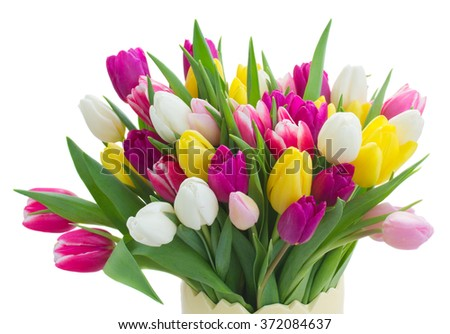 bunch of fresh purple, pink, yellow and white tulip flowers close up isolated on white background - stock photo