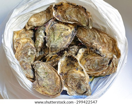 Bunch of Fresh Raw Oysters in the Bag - stock photo