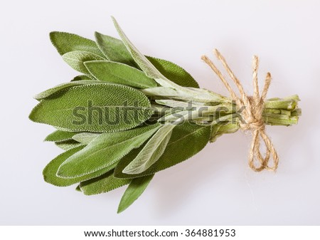 Bunch of fresh sage leaves on neutral background - stock photo
