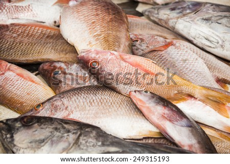 bunch of fresh snapper on the market - stock photo