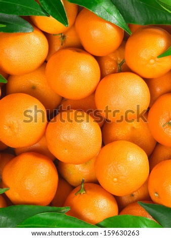Bunch of fresh tangerines oranges in market box, top view - stock photo