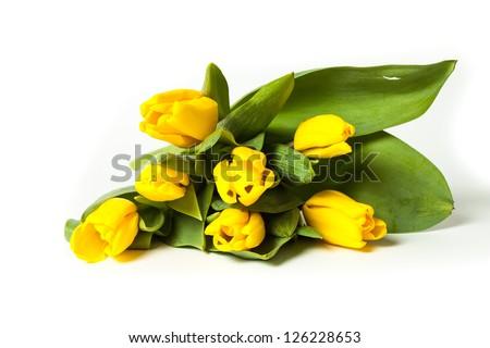Bunch of fresh yellow tulips isolated on white background - stock photo