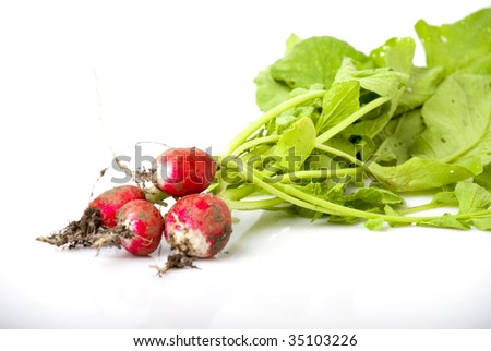 bunch of freshly picked radish with green tops and roots - stock photo