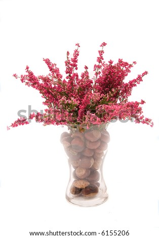 bunch of heather isolated on white background - stock photo