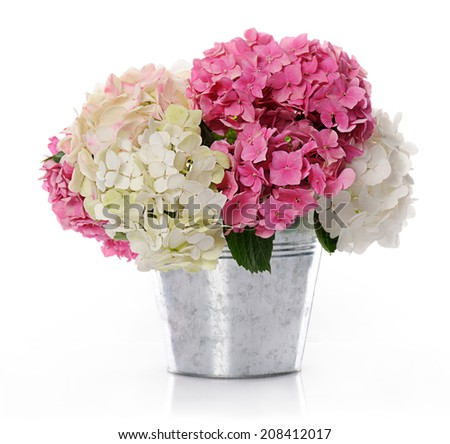 bunch of hydrangea - stock photo