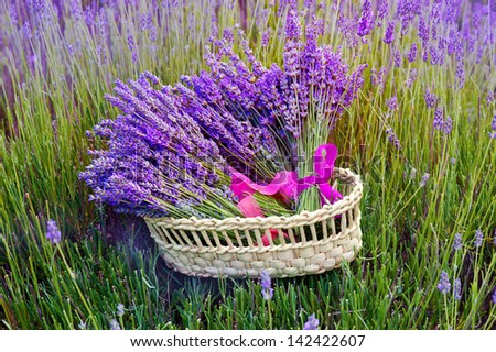 bunch of lavender flowers in basket  - stock photo