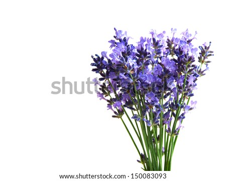 bunch of lavender flowers  on a white background - stock photo