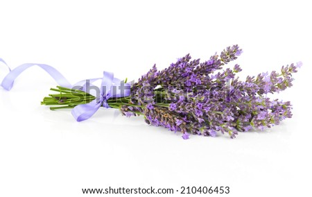 Bunch of lavender flowers with satin ribbon, on a white background - stock photo