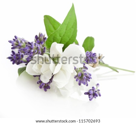Bunch of lavender nd jasmine flowers on a white background - stock photo